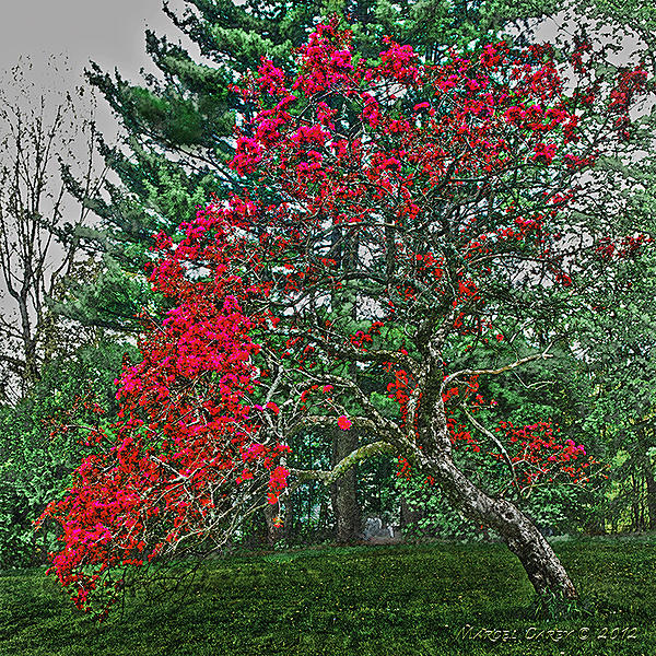 Hdr?-apple-blossom-study-worked.jpg