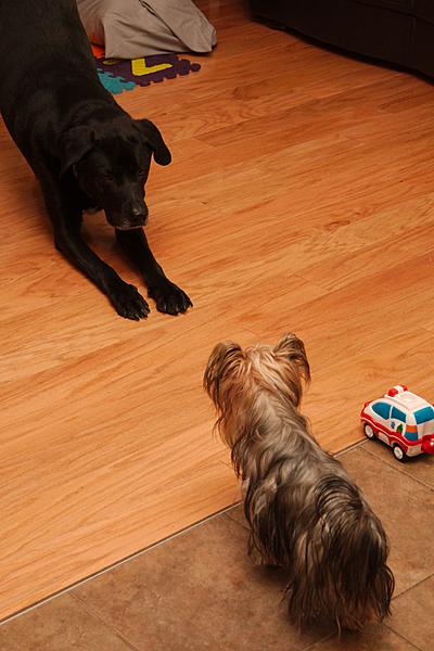 """Pets/""""Petography"""" Thread!-dec-28-day-two-childcare-dsc_8629-0021.jpg"""