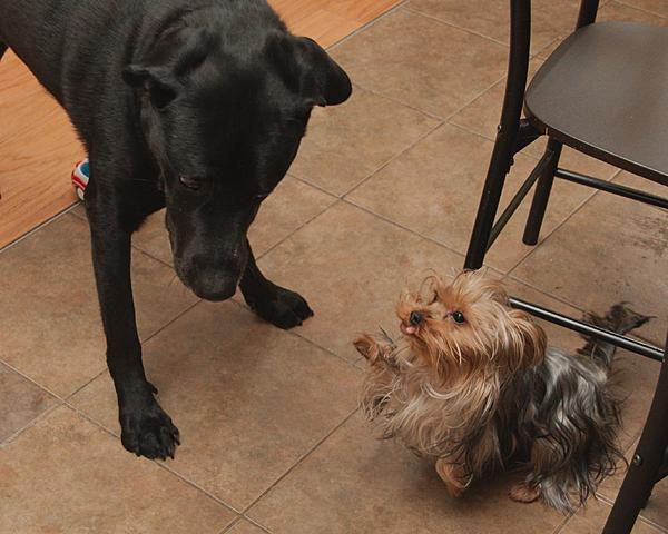 """Pets/""""Petography"""" Thread!-dec-28-day-two-childcare-dsc_8640-0016.jpg"""