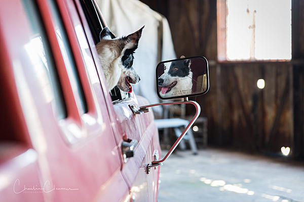 """Pets/""""Petography"""" Thread!-charlie-dcp-dogs-1.jpg"""