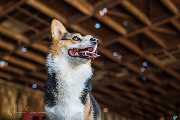 """Pets/""""Petography"""" Thread!-charlie-dcp-dogs-5.jpg"""
