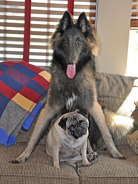 """Pets/""""Petography"""" Thread!-andre-molly-9-20-09_01-small-.jpg"""