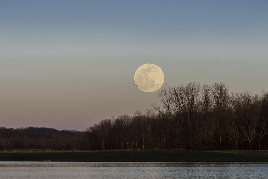 Post your 'before' and 'after' pictures-snow-moon-geese-r81_1632-edit2.jpg