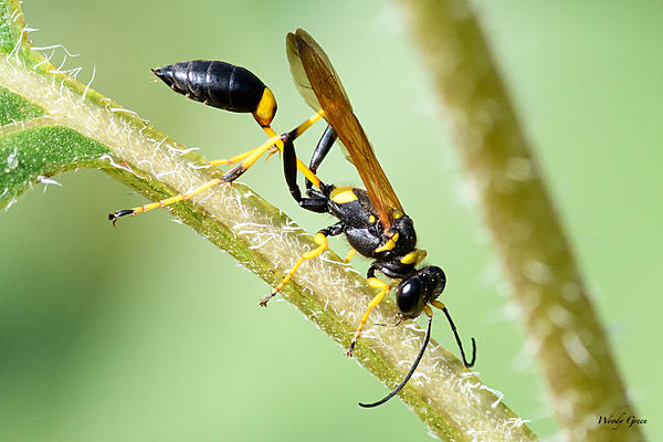 Woody's 2017 Wildlife, Nature and Other Stuff-wasp-221.jpg