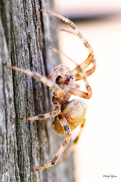 Woody's 2017 Wildlife, Nature and Other Stuff-spider-215.jpg
