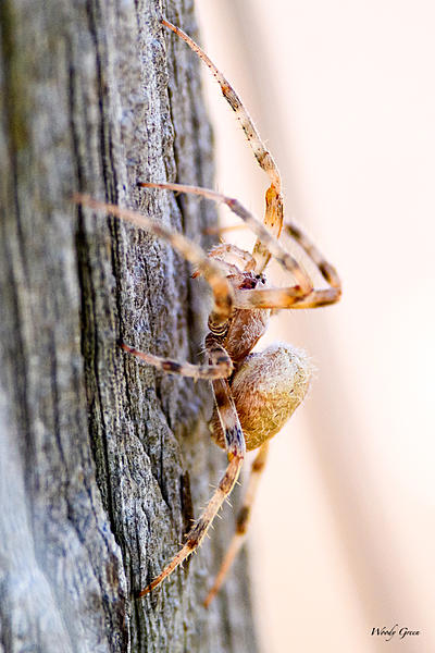 Woody's 2017 Wildlife, Nature and Other Stuff-spider-217.jpg