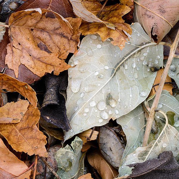 Woody's 2017 Wildlife, Nature and Other Stuff-wetleaves-200.jpg