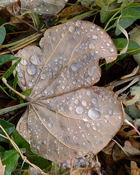Woody's 2017 Wildlife, Nature and Other Stuff-wetleaves-201.jpg
