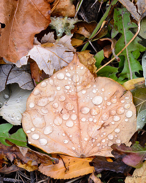 Woody's 2017 Wildlife, Nature and Other Stuff-wetleaves-202.jpg