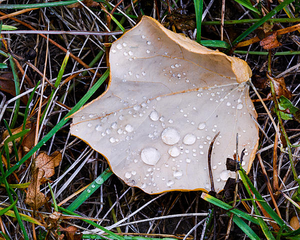 Woody's 2017 Wildlife, Nature and Other Stuff-wetleaves-203.jpg