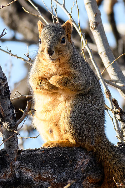 Woody's Wildlife, Nature and Other Stuff 2018-squirrel-300.jpg
