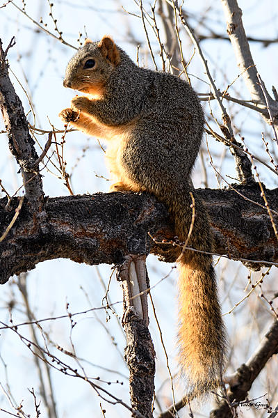 Woody's Wildlife, Nature and Other Stuff 2018-squirrel-301.jpg