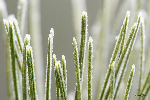 Woody's Wildlife, Nature and Other Stuff 2018-snowmacro-300.jpg