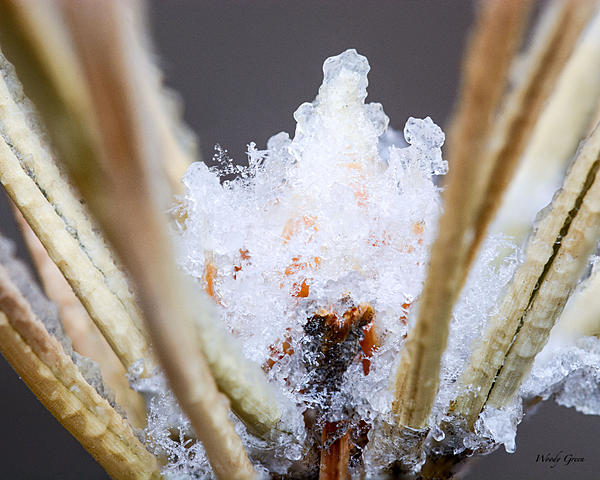 Woody's Wildlife, Nature and Other Stuff 2018-snowmacro-303.jpg