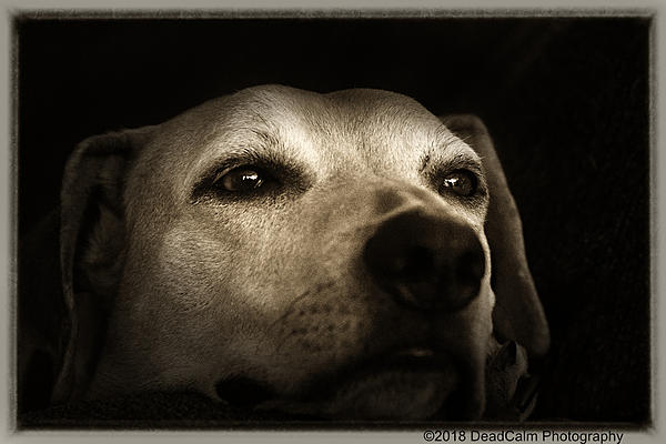 Dawg Pics' New Adventures of the D500 (and maybe the D300)-tallulah-n500_4312.jpg