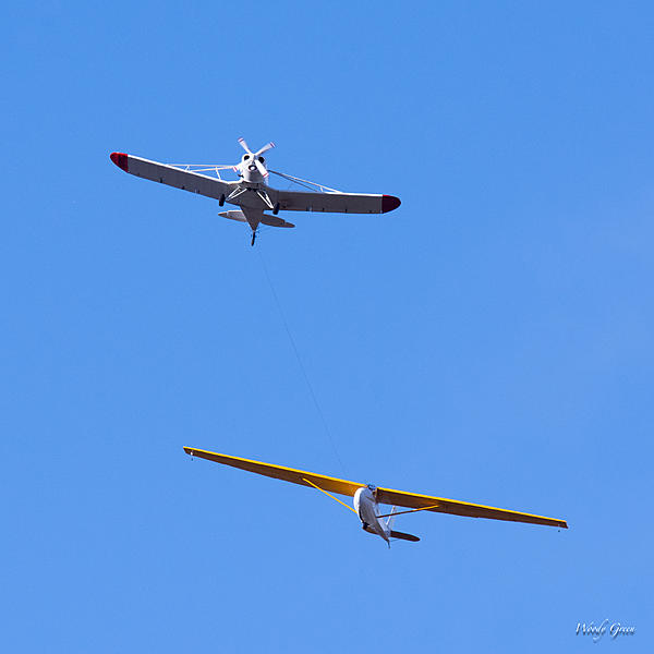 Woody's Wildlife, Nature and Other Stuff 2018-glider-300.jpg