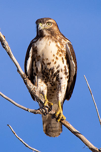 Woody's Wildlife, Nature and Other Stuff 2018-coopers-328.jpg