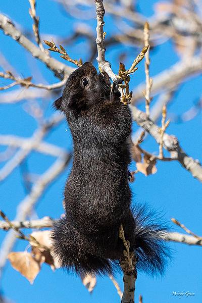 Woody's Wildlife, Nature and Other Stuff 2018-squirrel-355.jpg