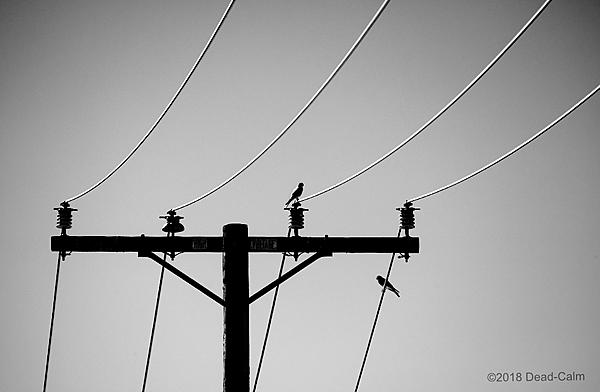 Dawg Pics' New Adventures of the D500 (and maybe the D300)-birds-wire-n-500_5288.jpg