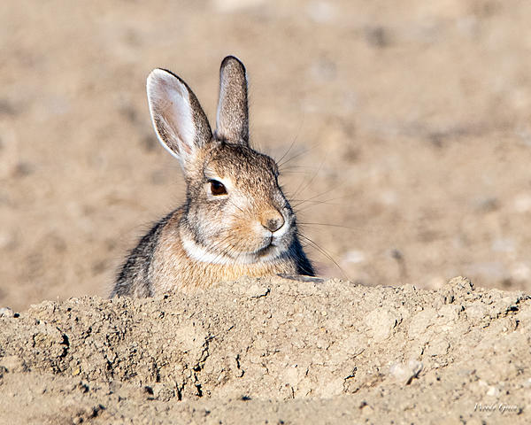 Woody's Wildlife, Nature and Other Stuff 2019-bunnystill-400.jpg