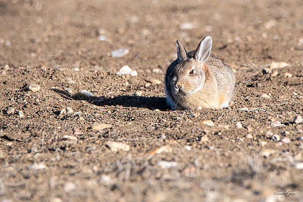 Woody's Wildlife, Nature and Other Stuff 2019-bunnystill-401.jpg