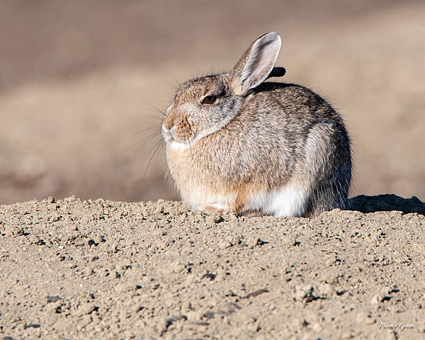 Woody's Wildlife, Nature and Other Stuff 2019-bunnystill-402.jpg