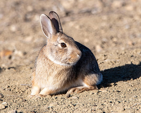 Woody's Wildlife, Nature and Other Stuff 2019-bunnycute-403.jpg