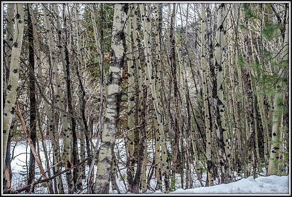 Pup's place 2019-750_7137-hdr.jpg