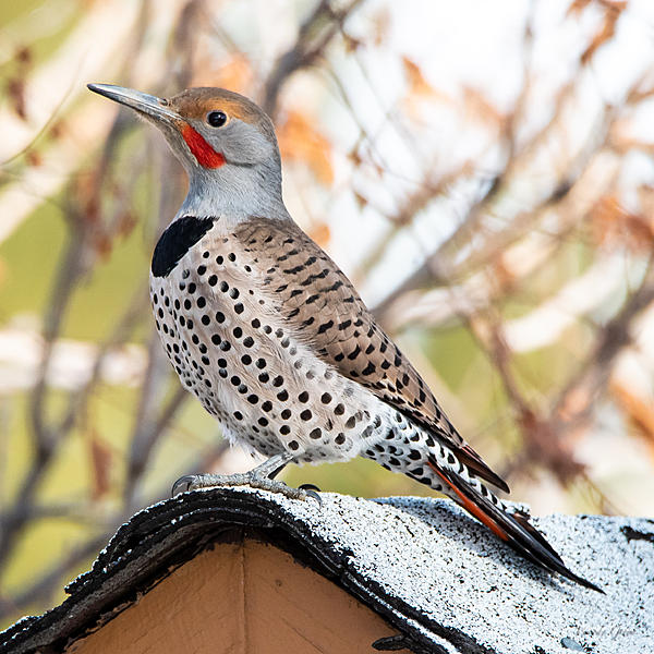 Woody's Wildlife, Nature and Other Stuff 2019-flicker-400.jpg