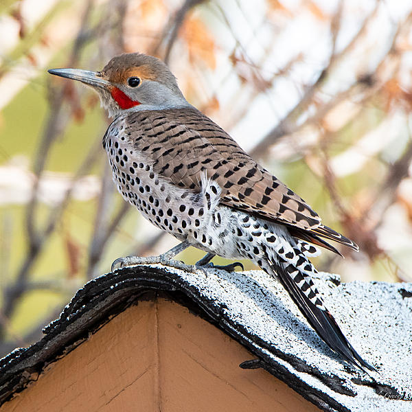 Woody's Wildlife, Nature and Other Stuff 2019-flicker-401.jpg