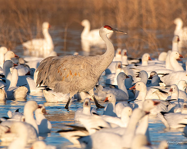 Woody's Wildlife, Nature and Other Stuff 2019-crowdedpond-400.jpg