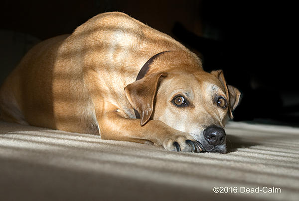 Dawg Pics' New Adventures of the D500 (and maybe the D300)-tallulah-birthday-2-n_dsc4653.jpg