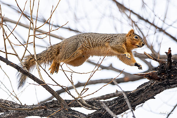 Woody's Wildlife, Nature and Other Stuff 2019-rockythesquirrel-400.jpg