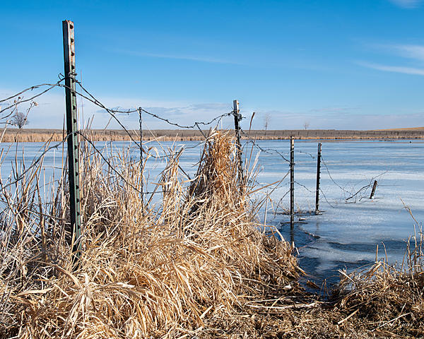 Woody's Wildlife, Nature and Other Stuff 2019-fence-400.jpg