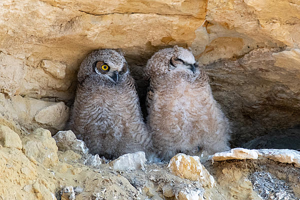 Woody's Wildlife, Nature and Other Stuff 2019-owlnest-425.jpg