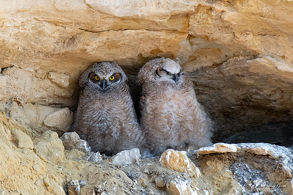 Woody's Wildlife, Nature and Other Stuff 2019-owlnest-426.jpg
