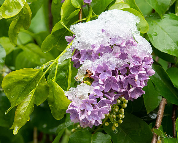 Woody's Wildlife, Nature and Other Stuff 2019-snowflower-400.jpg