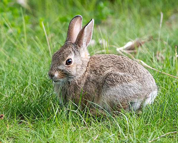 Woody's Wildlife, Nature and Other Stuff 2019-bunny-434.jpg