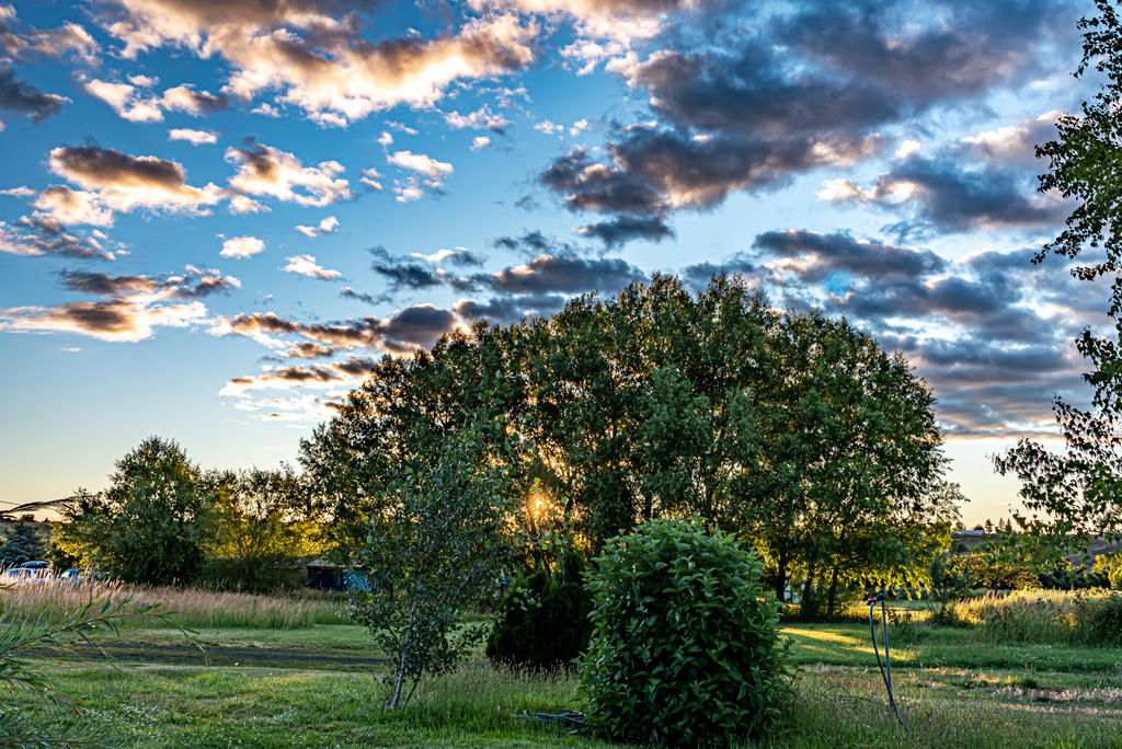 Pup's place 2019-750_3080-hdr.jpg