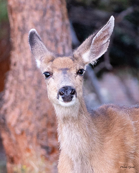 Woody's Wildlife, Nature and Other Stuff 2019-doe-401.jpg