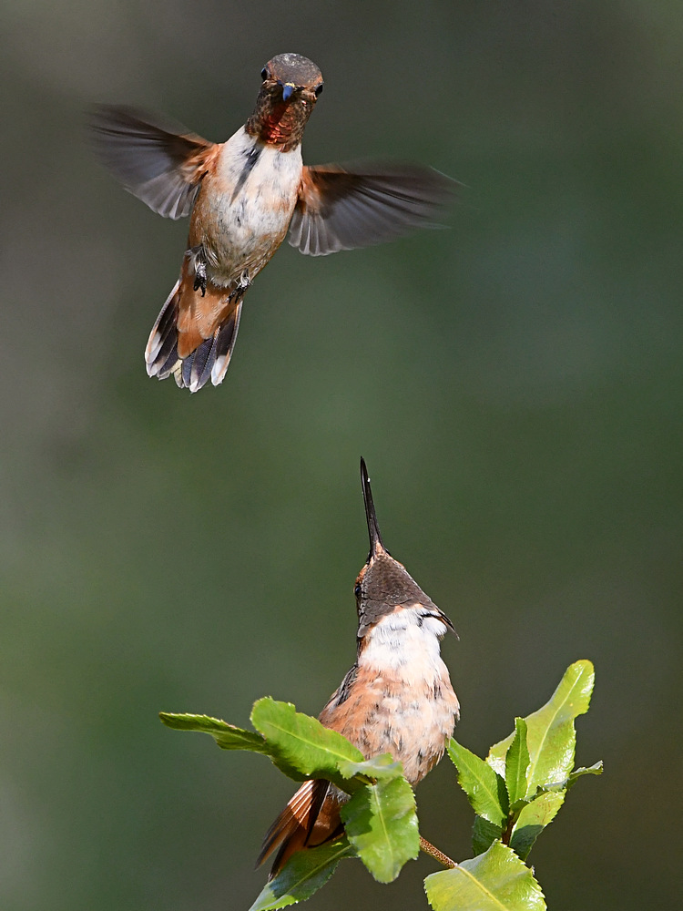 Post your photobombed-hummer11.jpg