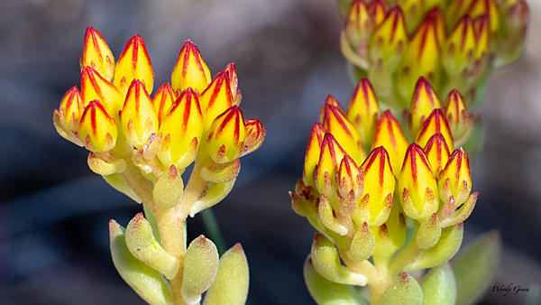 Woody's Wildlife, Nature and Other Stuff 2019-flower-405.jpg