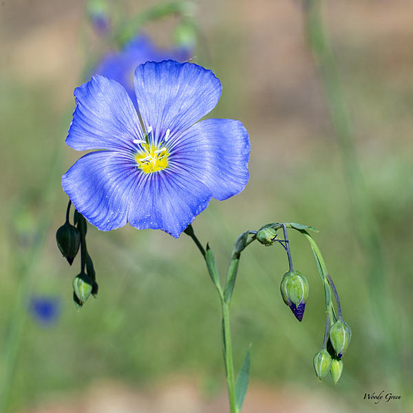 Woody's Wildlife, Nature and Other Stuff 2019-flower-407.jpg