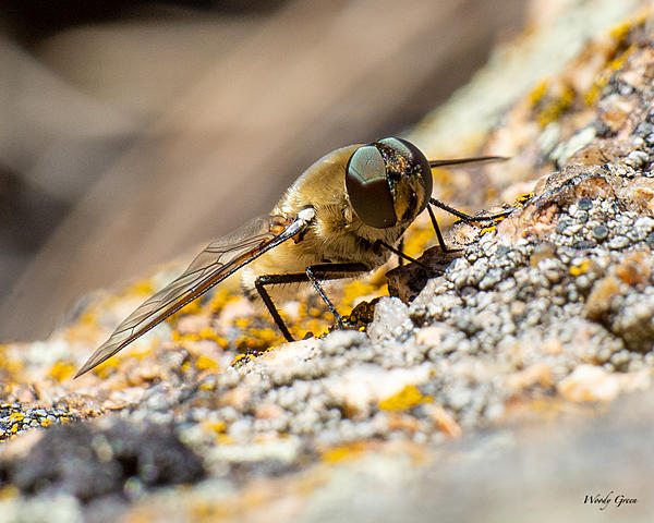 Woody's Wildlife, Nature and Other Stuff 2019-bugs-400.jpg
