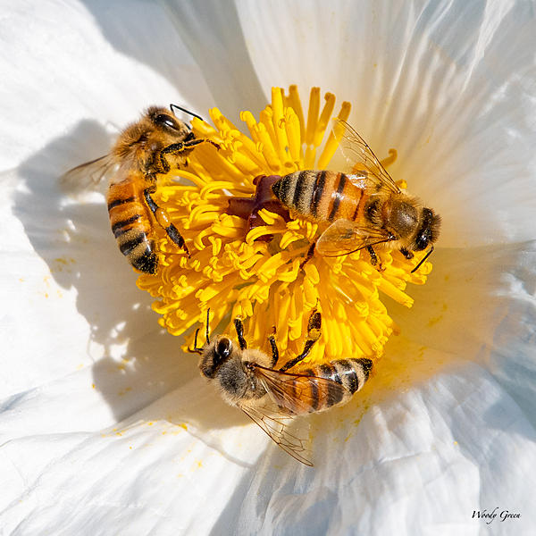 Woody's Wildlife, Nature and Other Stuff 2019-bees-411.jpg