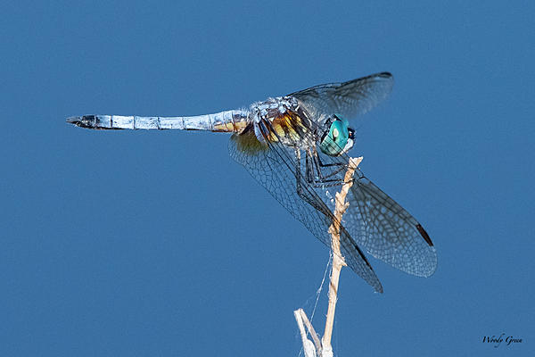 Woody's Wildlife, Nature and Other Stuff 2019-df-410.jpg