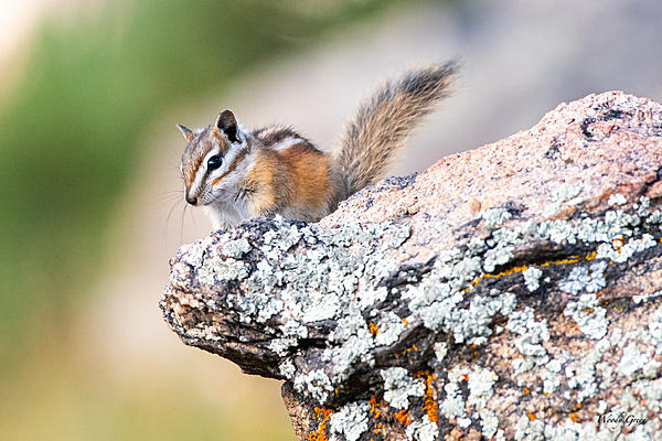 Woody's Wildlife, Nature and Other Stuff 2019-chipper-425-408.jpg