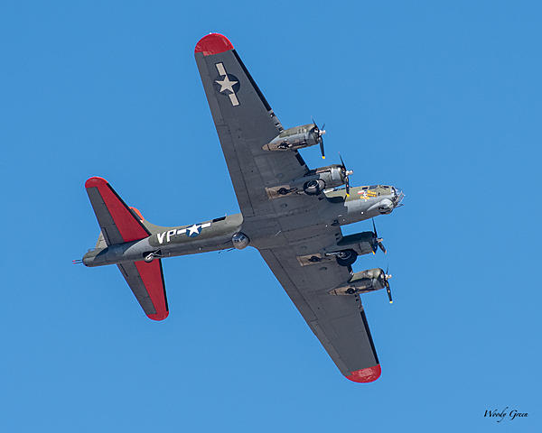 Woody's Wildlife, Nature and Other Stuff 2019-b-17-405.jpg