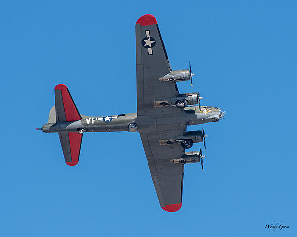 Woody's Wildlife, Nature and Other Stuff 2019-b-17-406.jpg