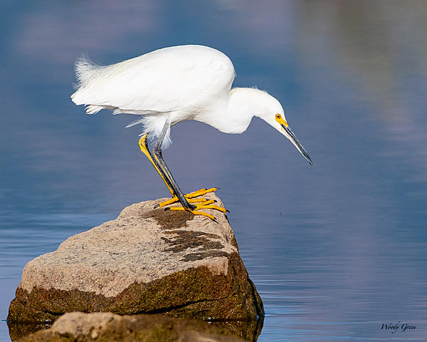 Woody's Wildlife, Nature and Other Stuff 2019-snowy-442.jpg